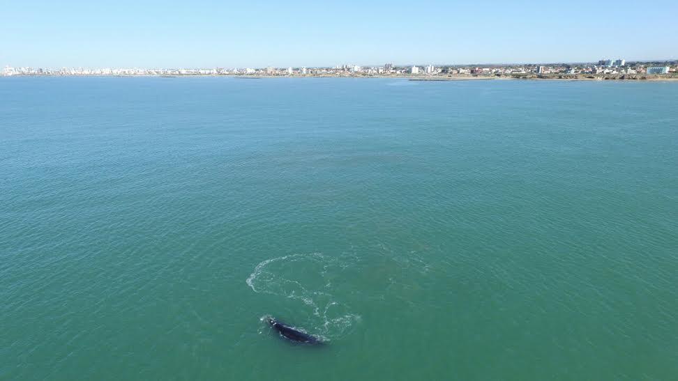 ballena costa 5