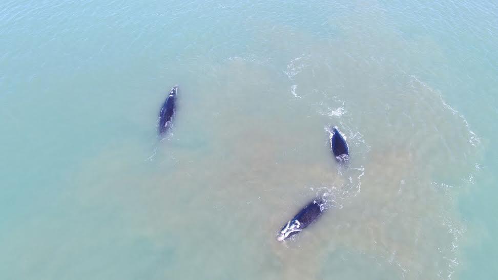 ballena costa 6