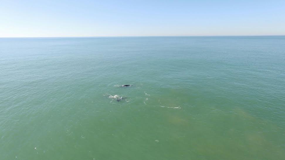 ballena costa