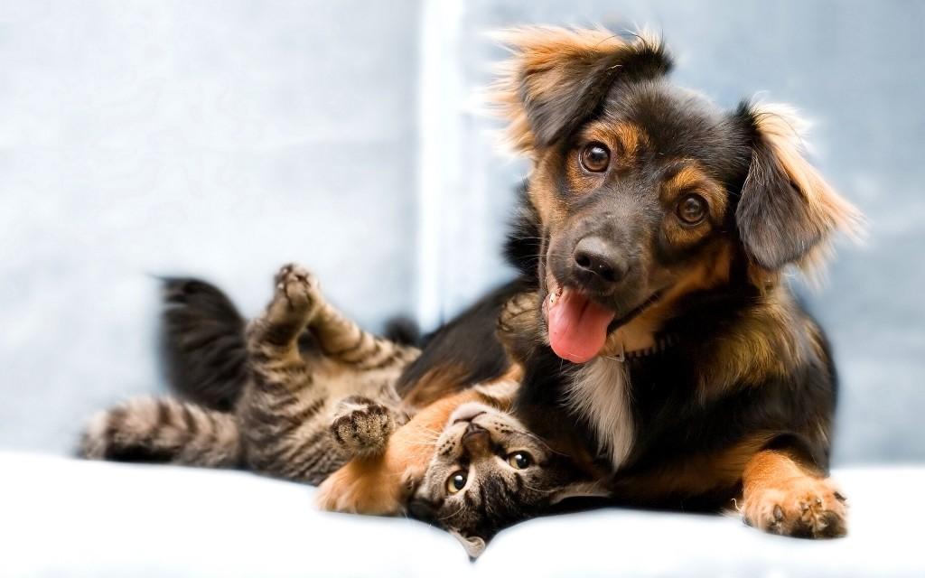 Veterinario revela qué hacen las mascotas minutos antes de morir